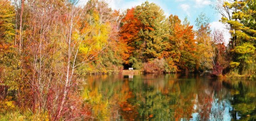 autumn-986327_12801