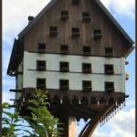 Homing Pigeon Nest