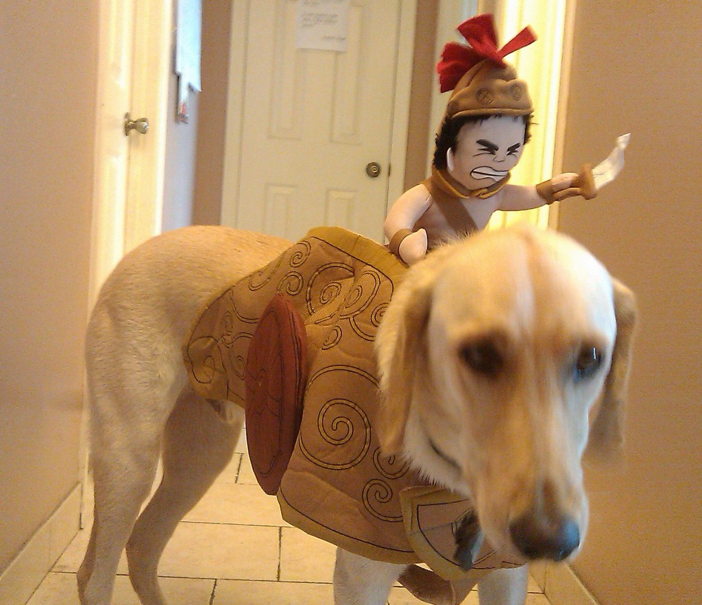 Halloween Costumes for Dogs: Niche Market
