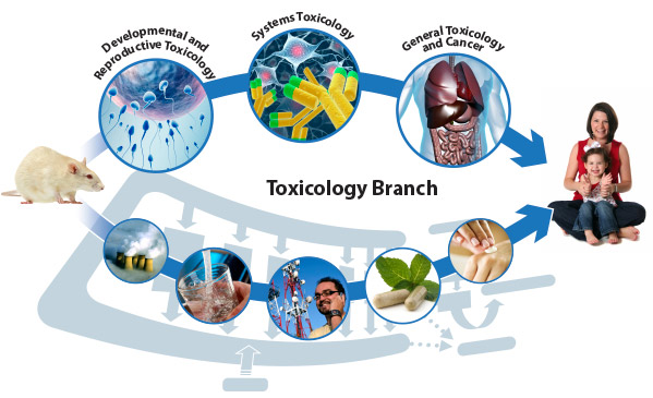 Toxicology Branch