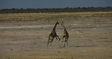 Fotoserie: de dieren van Zuidelijk Afrika