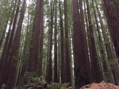 Man sieht den Wald vor lauter Bäumen nicht...