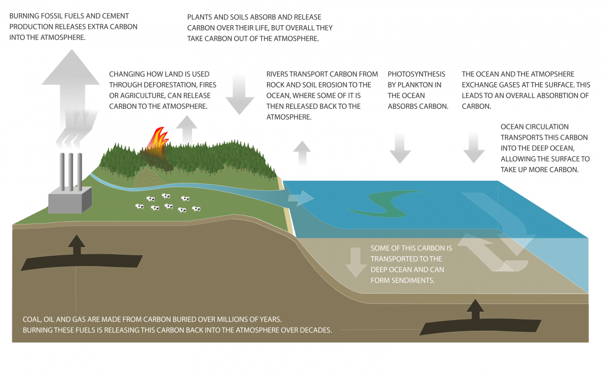 Carbon Cycle Diagram Niwa