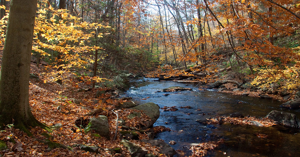 Late Fall Desktop Wallpaper Black River County Park Cooper Mill Njhiking Com