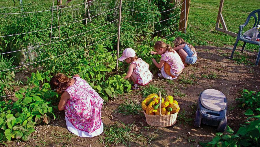 Vegetable Gardens in New Jersey