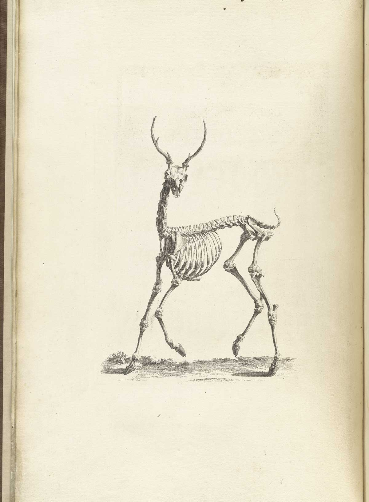 Reindeer Wallpaper Cute Historical Anatomies On The Web William Cheselden Home