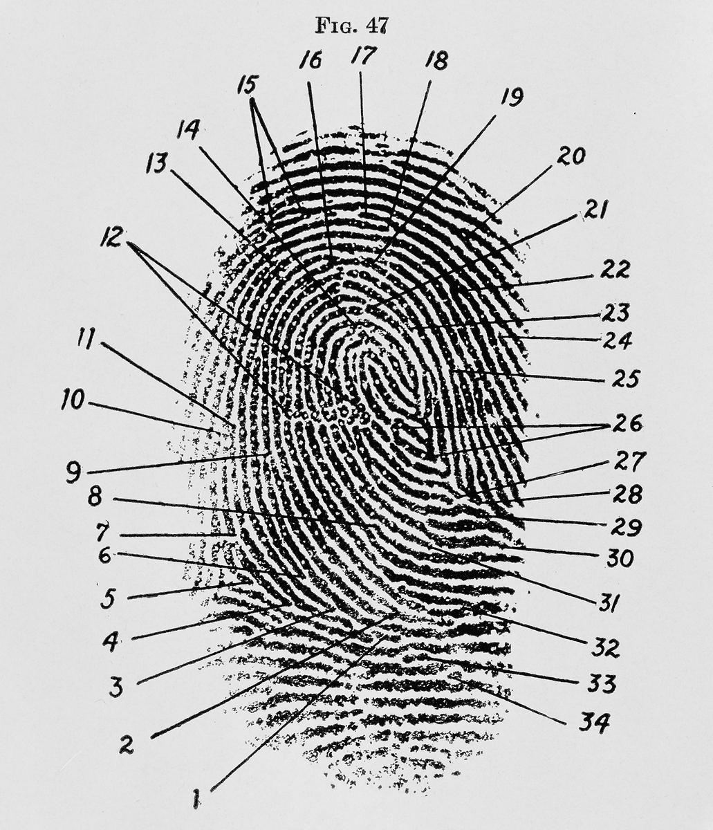 finger diagram
