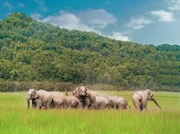 tourist places to visit in dehradun  - Rajaji National Park