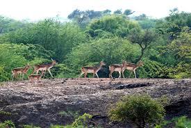 Gautam Buddha Wildlife Sanctuary