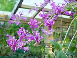 orchids in India