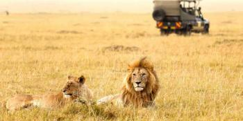 Gir National Park, Gir Forest National Park,