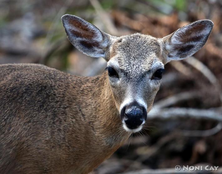 IMG_3348 deer