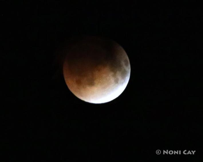IMG_4037Blood Moon