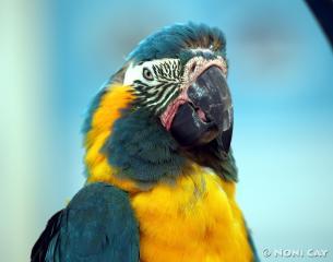 IMG_4398parrot Parrot
