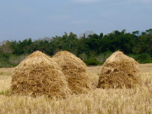 business blog in the haystack