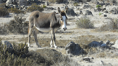 Our World Aflame Part Five: A Wild Donkey