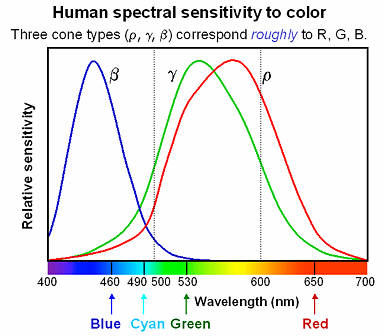 Spectral Sensitivity - Curve Distribution of 3 separate cone cells - free letterhead samples