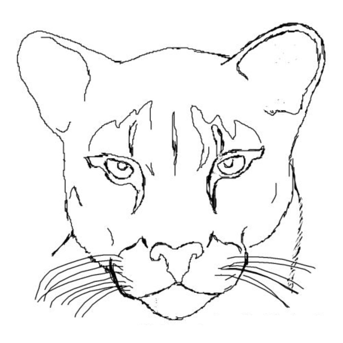 coloring pages mountain lion feed