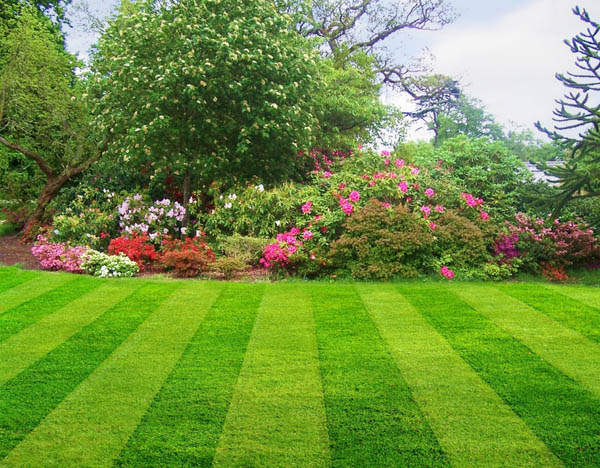7 Steps to a Better Lawn