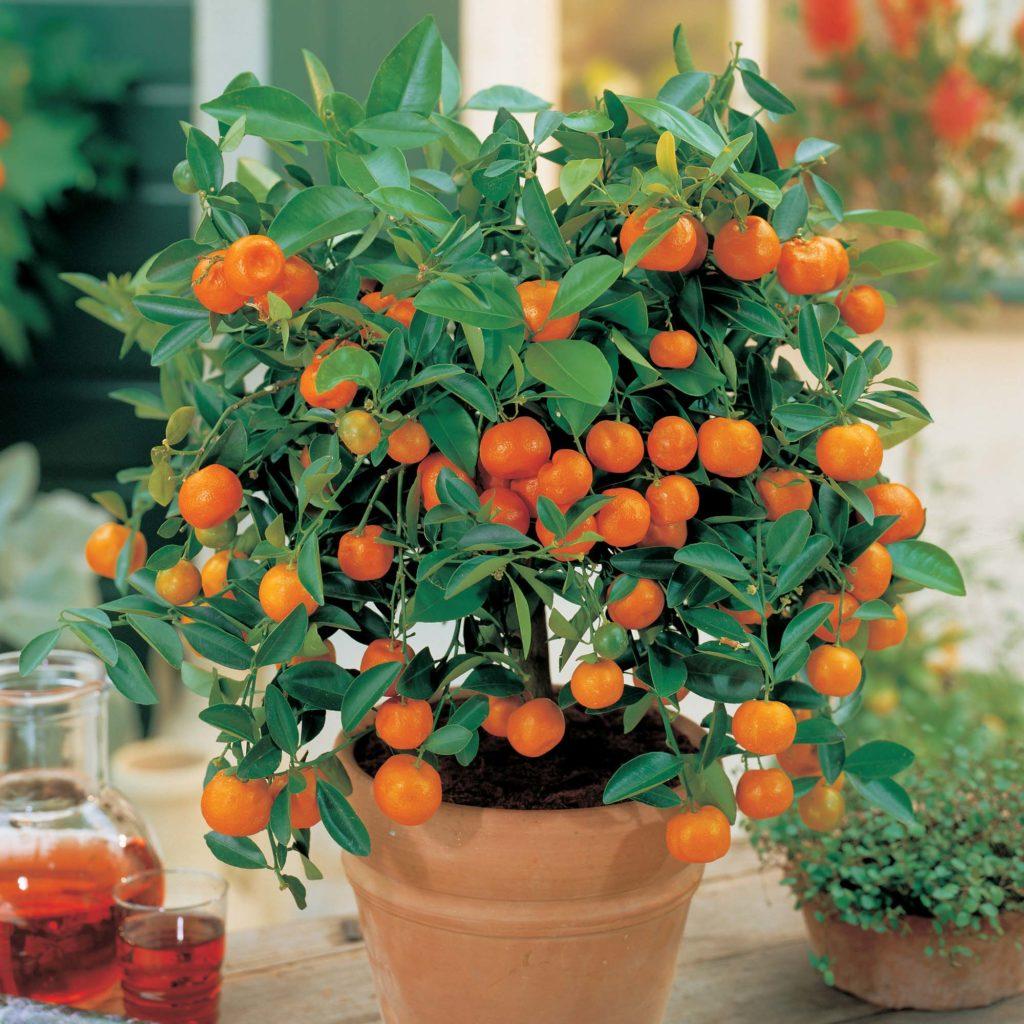 7 Arboles Frutales Que Puedes Cultivar Sin Necesidad De