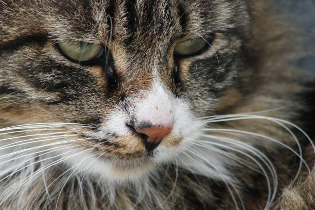 Notas sobre los gatos en Turquía