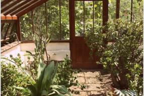 Notas desde el pequeño jardín botánico de Chelsea