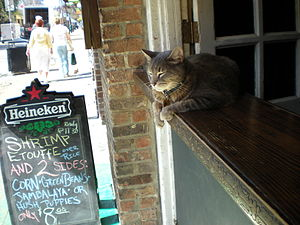 English: Lazy Afternoon in French Quarter - Ne...