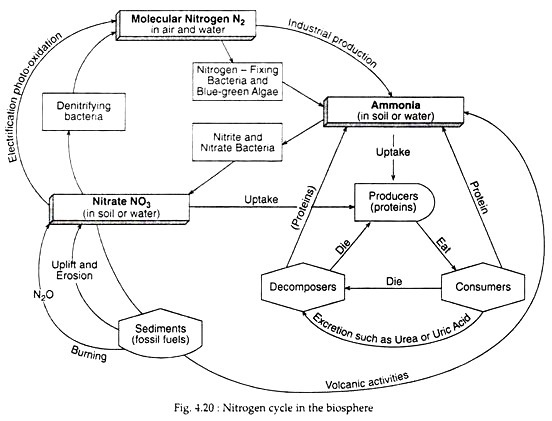 Nitrogen Cycle (With Diagram) Ecology