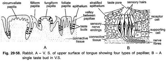 x ray vision wiring diagram