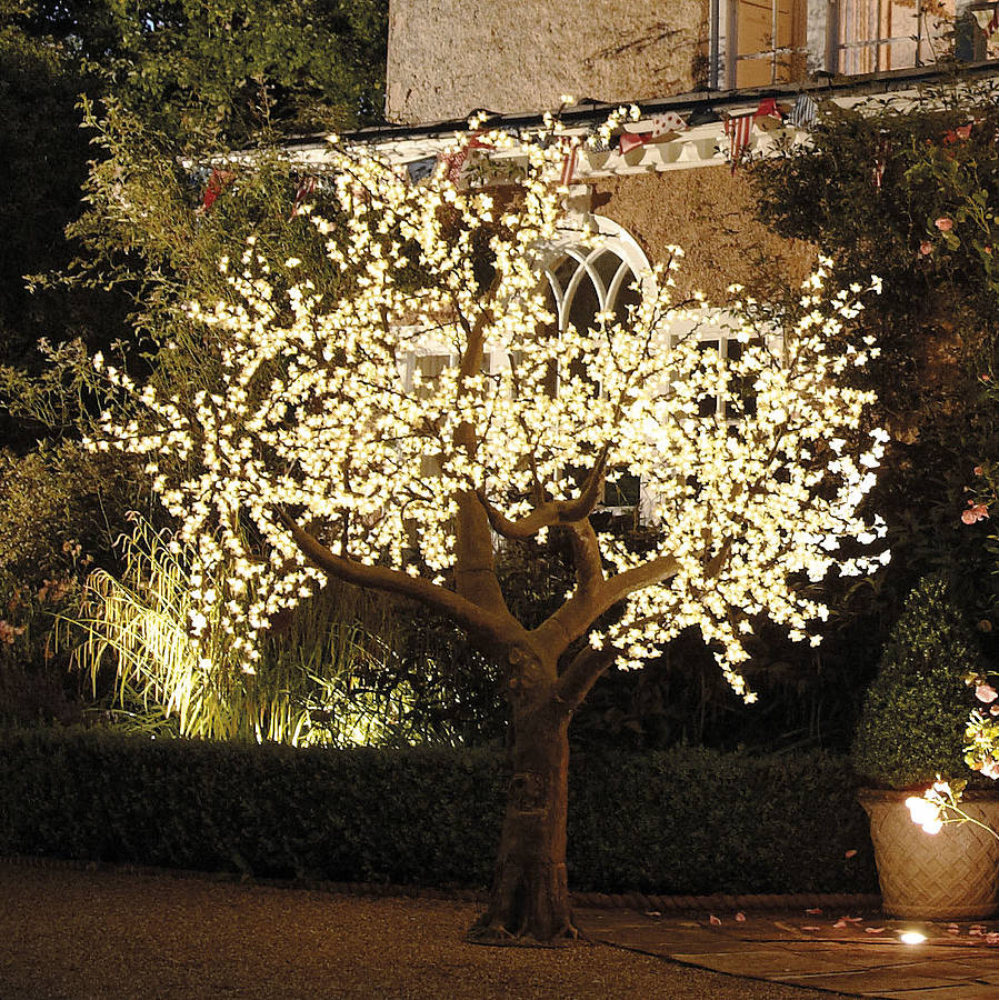Fall String Lights Wallpaper Weddings Illuminated Decorative Led Tree By Enchanted Trees