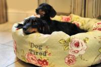 english rose floral donut dog bed by pins and ribbons ...