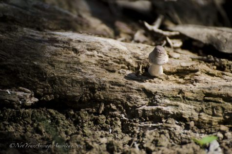 A lone mushroom tells us that rain does occur.