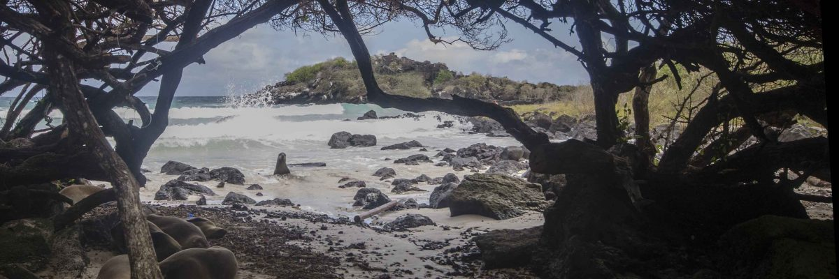 Puerto Chino, Sea Lion
