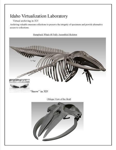 Whale Bone Wire Management