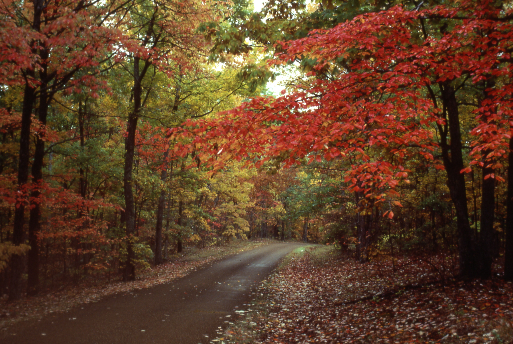 Falling Leaves Wallpaper Screensavers Fall Colors Natchez Trace Parkway U S National Park