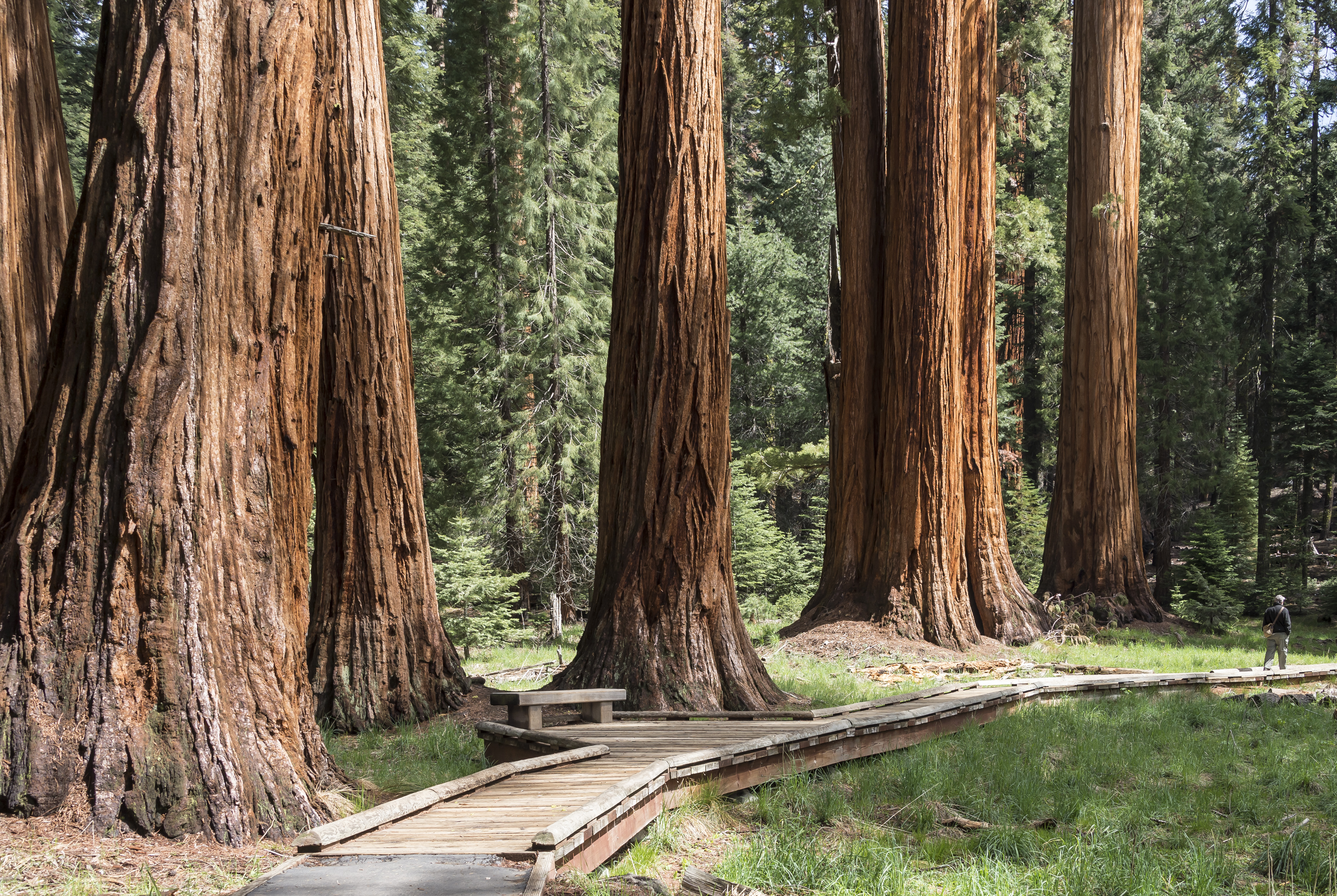 Cartoon Fall Wallpaper High Def Exploring Giant Sequoia Groves Sequoia Amp Kings Canyon