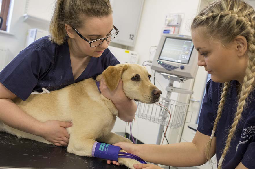 Veterinary Nursing Science (final year top-up) BSc (Hons
