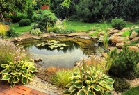 Natural Backyard Ponds