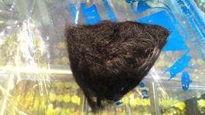 rambut aqiqah