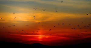sunset-birds-clouds-206331