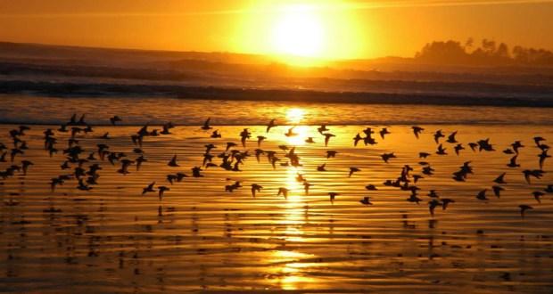 sunset_b