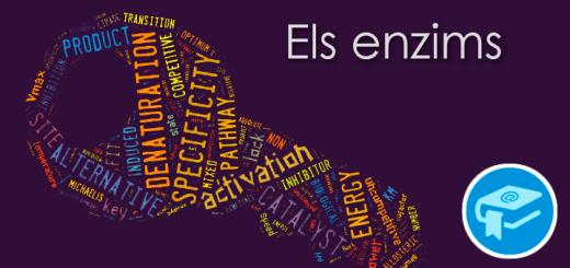 Apunts-ElsEnzims