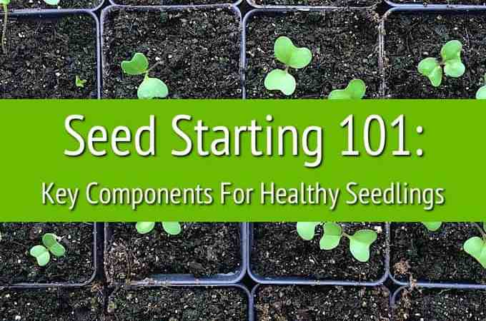 Seed Starting 101: Key Components For Healthy Seedlings