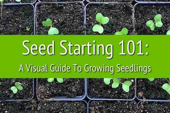 Seed Starting 101: A Step-By-Step Visual Guide To Growing Seedlings At Home