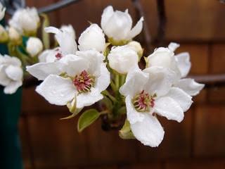 Garden Inventory: April 2011