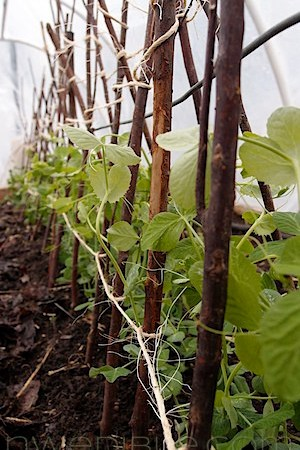 To Do In The Northwest Edible Garden: March 2012