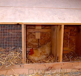 Chicken Coop Sand Bed and More (6)