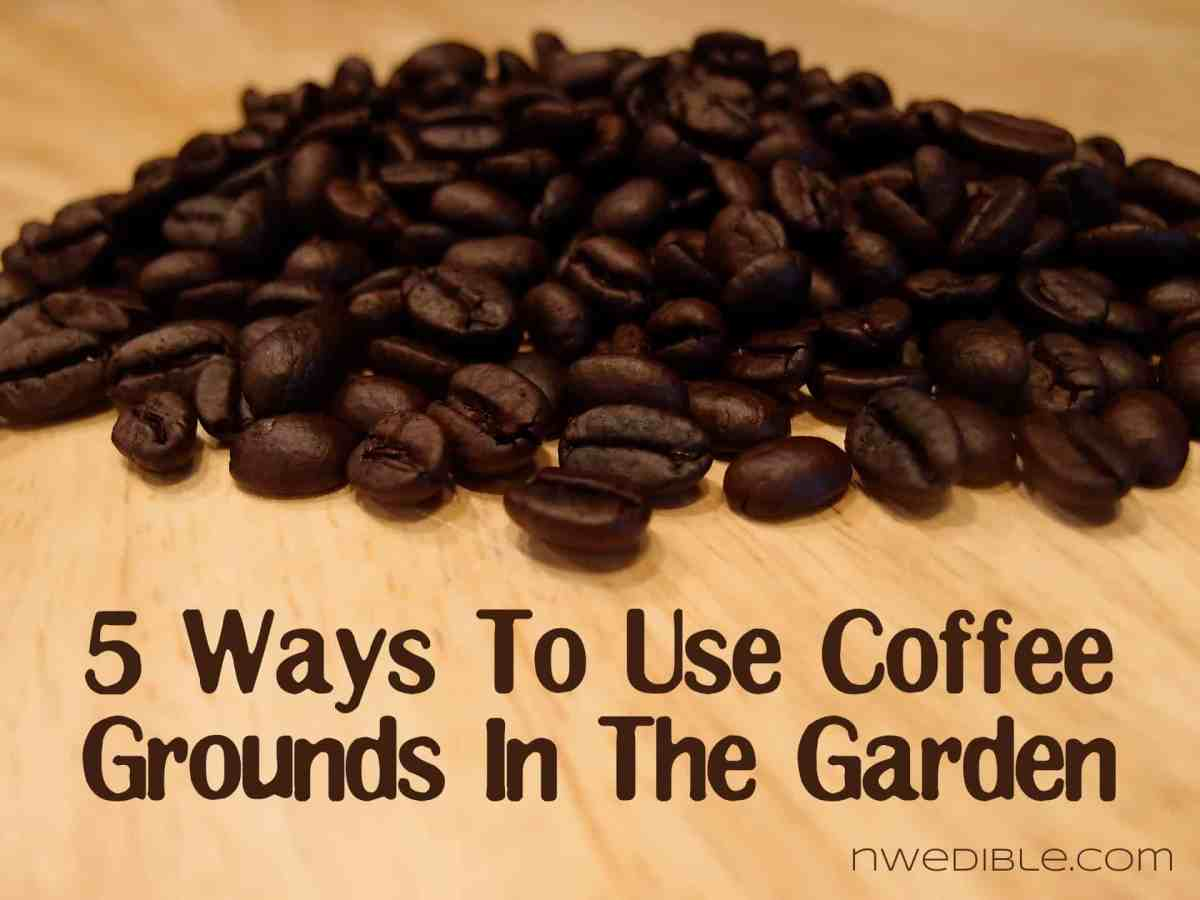 5 Ways To Use Coffee Grounds In The Garden Northwest Edible Life