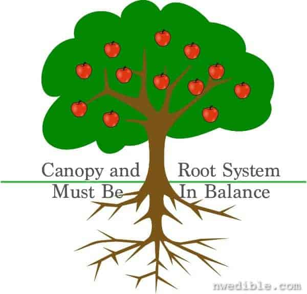 apple-tree-with-roots-hi (2)