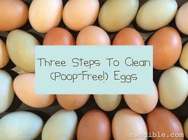 Three Steps To Clean, Poop-Free Eggs